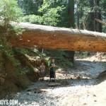 Family Camping Trips Rock – Camping with Boys